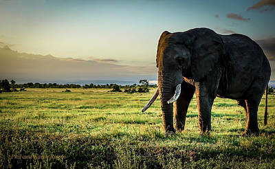Photograph - Elephant Near Mt Kenya by Philip Rispin