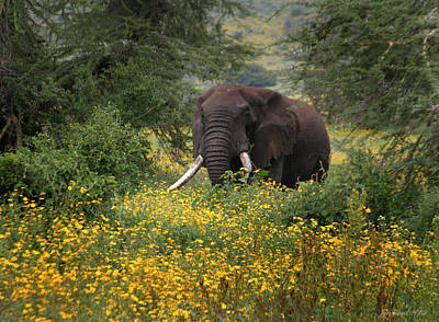 Feild Photograph - Elephant Of The Crater by Joseph G Holland
