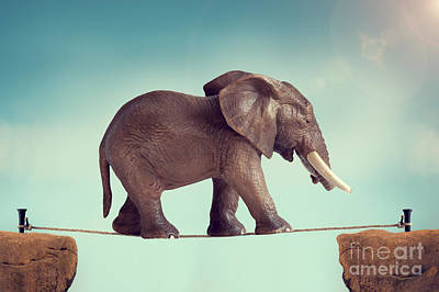 Predicament Photograph - Elephant On A Tightrope  by Lee Avison