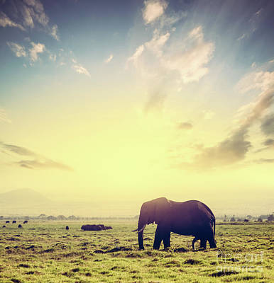 Photograph - Elephant On African Savanna At Sunset. Safari In Amboseli, Kenya, Africa by Michal Bednarek