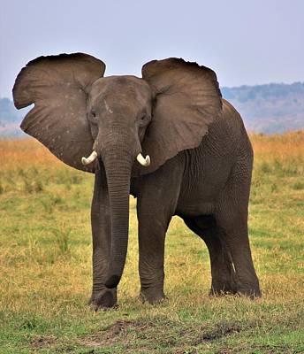 Wildlife Photograph - Elephant On The Chobe River by Stacie Gary