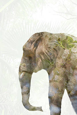 Double Photograph - Elephant Palms by Pamela Williams