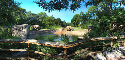 Elephant Pano - Kc Zoo Art Print by Gary Gingrich Galleries