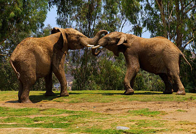 Photograph - Elephant Play 3 by Anthony Jones