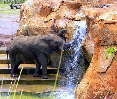 Photograph - Elephant Playing In The Waterfall by Terri Mills