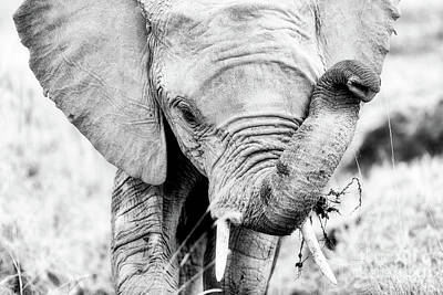 Photograph - Elephant Portrait In Black And White by Jane Rix