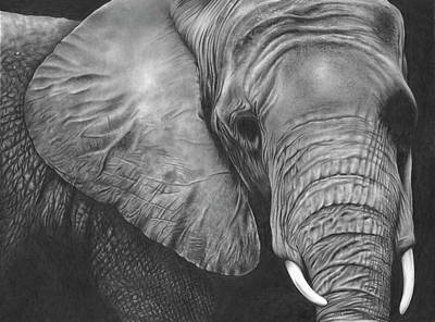Animals Drawings - Elephant Portrait by Jerry Winick