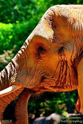 Photograph - Elephant Portrait by Lisa Wooten