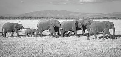 Photograph - Elephant Procession by Chris Scroggins