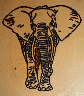 Photograph - Elephant by Rebecca Anne Grant