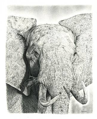 African Animals Drawing - Elephant by Remrov