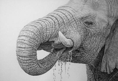 Elephant Pencil Drawing Drawing - Elephant by Rita Niblock