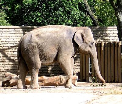 Nys Photograph - Elephant by Rose Santuci-Sofranko