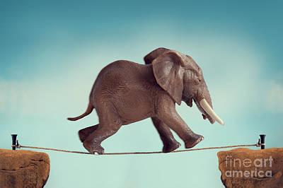 Predicament Photograph - Elephant Running Across A Tightrope by Lee Avison