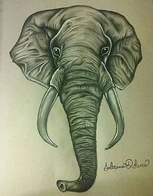 Elephant Pencil Drawing Drawing - Elephant by Sabrina Luna