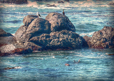 Photograph - Elephant Seal by Hanny Heim