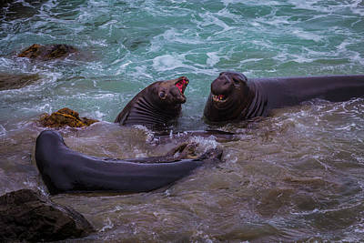 Cambria Photograph - Elephant Seals In The Surf by Garry Gay