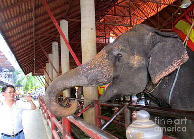 Photograph - Elephant Show 1 by Randall Weidner