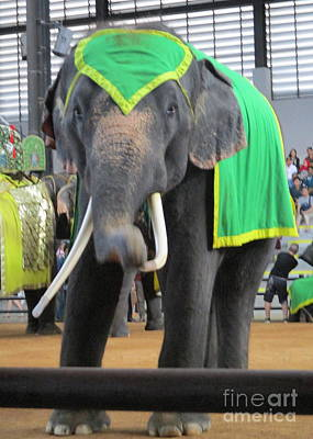 Photograph - Elephant Show 4 by Randall Weidner