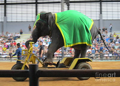 Photograph - Elephant Show 5 by Randall Weidner