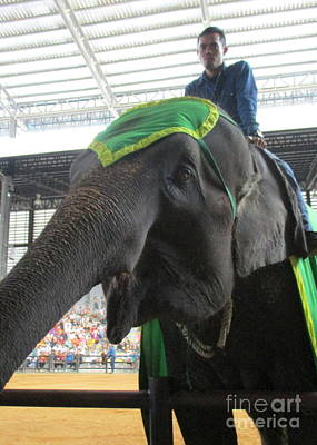 Photograph - Elephant Show 7 by Randall Weidner