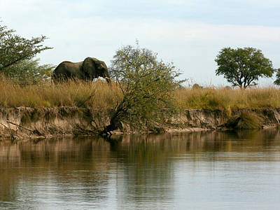 Photograph - Elephant Sighting by Karen Zuk Rosenblatt