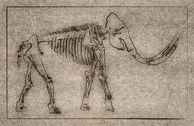 Epic Digital Art - Elephant Skeletal Sketch Art by Brett Pfister
