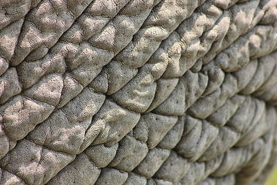 Elephant Photograph - Elephant Skin Pattern by Roger Brown