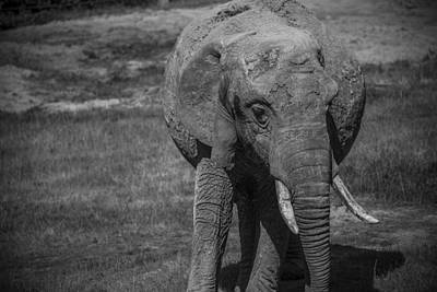 Photograph - Elephant Stance by Stewart Scott
