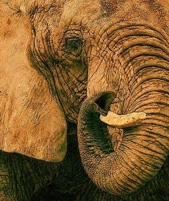 Elephant Study In Texture Art Print