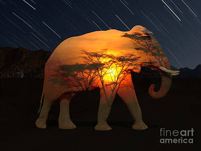 Sunset Digital Art - Elephant Sunset 2 by Tin Tran