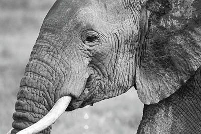 Photograph - Elephant Tears In Black And White by Gill Billington