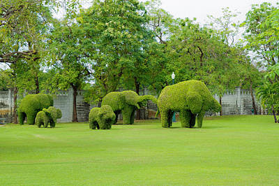 Photograph - Elephant Topiaries by David Freuthal