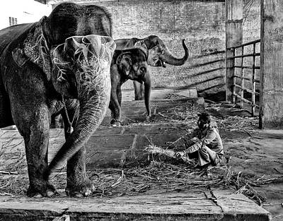 Photograph - Elephant Training by M G Whittingham