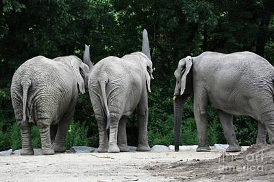 Elephant Trio Art Print by Karol Livote