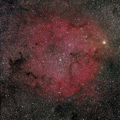 Photograph - Elephant Trunk Nebula by Tony Sarra