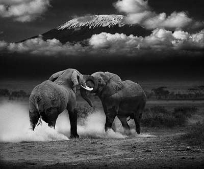 Elephant Tussle Art Print by Mike Gaudaur