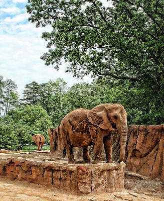 Photograph - Elephant Walk by Cathy Harper
