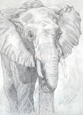 Elephant Pencil Drawing Drawing - Elephant Walk by Nancy Rucker