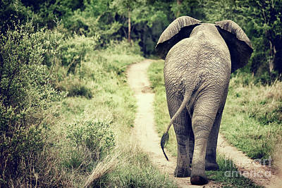 Photograph - Elephant Walking In The Wild by Anna Om