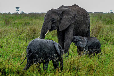 Photograph - Elephant With Babies by Marilyn Burton