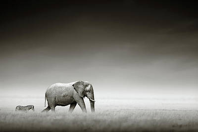 Dark Wall Art - Photograph - Elephant With Zebra by Johan Swanepoel