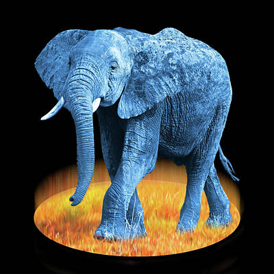 Photograph - Elephant - World On Fire by Gill Billington
