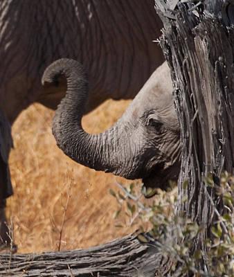 Elephants - Shy Baby Art Print by Nancy D Hall