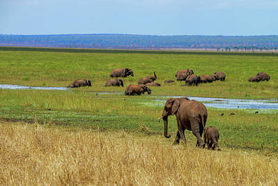 Photograph - Elephants Along The Tarangire River by Marilyn Burton