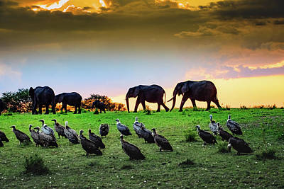 Photograph - Elephants And Vultures  by Janis Knight