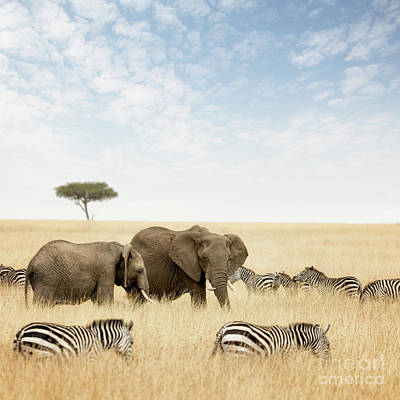 Pachyderm Photograph - Elephants And Zebras In The Masai Mara by Jane Rix