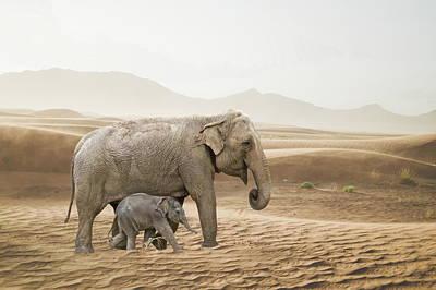 Photograph - Elephants  by Andrea Kollo