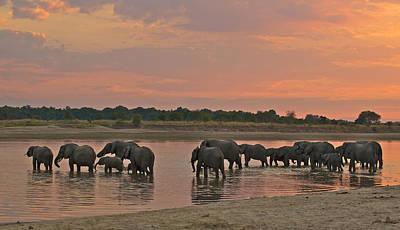 Elephants At Dusk Art Print by Johan Elzenga