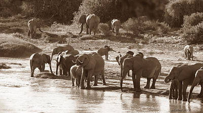 Photograph - Elephants At Mara River by Joseph G Holland
